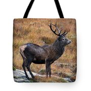 Red Deer Stag In Autumn Tote Bag