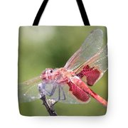 Red Dragonfly 5 Tote Bag