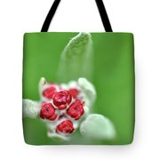 Red Everlasting At Amatzia Forest -1 Tote Bag