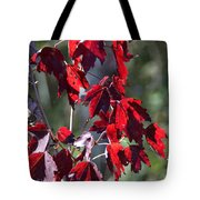 Red Fall Leaves In The Sun Tote Bag