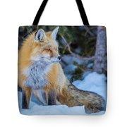 Red Fox At Dawn In Winter Tote Bag