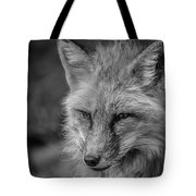 Red Fox In Black And White Tote Bag