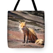 Red Fox In Maine Tote Bag