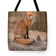 Red Fox In Pose Tote Bag