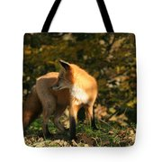 Red Fox In Shadows Tote Bag