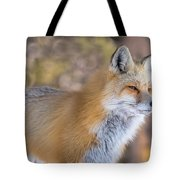 Red Fox In Winter Glow Tote Bag