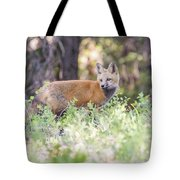 Red Fox Kit Looking For Mom Tote Bag