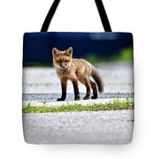 Red Fox Kit On Road Tote Bag