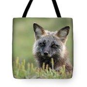Red Fox Morph Tote Bag