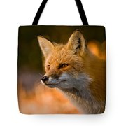 Red Fox Pictures 118 Tote Bag