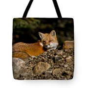 Red Fox Pictures 126 Tote Bag