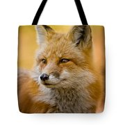 Red Fox Pictures 131 Tote Bag
