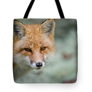 Red Fox Pictures 146 Tote Bag