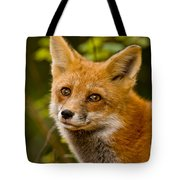 Red Fox Pictures 155 Tote Bag