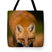 Red Fox Pictures 161 Tote Bag