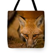Red Fox Pictures 162 Tote Bag