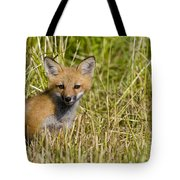 Red Fox Pictures 19 Tote Bag