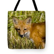 Red Fox Pictures 34 Tote Bag