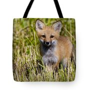 Red Fox Pictures 7 Tote Bag