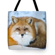 Red Fox Pictures 98 Tote Bag