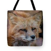 Red Fox Portrait 2 Tote Bag