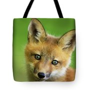 Red Fox Pup Tote Bag