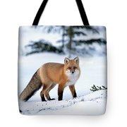 Red Fox Vulpes Vulpes Portrait Tote Bag