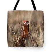 Red Grouse Calling Tote Bag