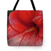 Red Hippeastrum Charisma Tote Bag