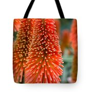 Red-hot Poker Flower Kniphofia Tote Bag