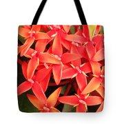 Red Indian Flowers Like Sunshine - Macro Photography Tote Bag