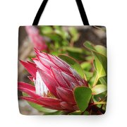 Red King Protea Bud Tote Bag
