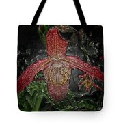 Red Lady Slipper Tote Bag