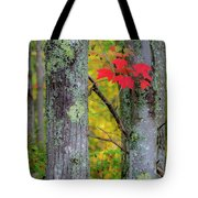 Red Leaves Tote Bag by Gary Lengyel