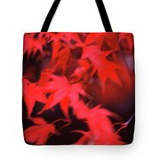 Red Leaves In Fall  Tote Bag