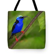 Red-legged Honeycreeper Tote Bag