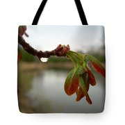 Red Maple Seed Pods At Dawn Tote Bag