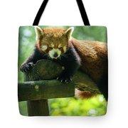 Red Panda Ailurus Fulgens Jerez De La Frontera Spain Tote Bag
