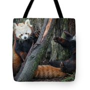 Red Panda Cubs At Play Tote Bag