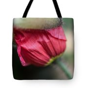 Red Poppy Sneaking Out Tote Bag