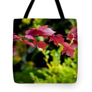 Red Red Maple Leaves Tote Bag