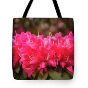 Red Rhododendron Flowers At Floriade, Canberra, Australia. Tote Bag