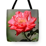 Red Rose On A Bush Tote Bag