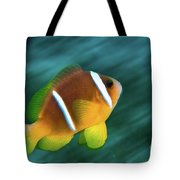 Red Sea Clownfish  Tote Bag