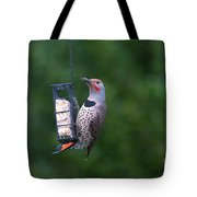 Red-shafted Northern Flicker On Suet Tote Bag