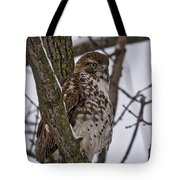 Red Shouldered Hawk - Madison - Wisconsin Tote Bag