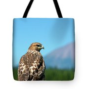 Red-shouldered Hawk With Mt. Mclaughlin In The Background Tote Bag