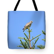 Red-shouldered Perch Tote Bag
