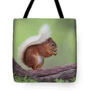 Red Squirrel Curved Log Tote Bag