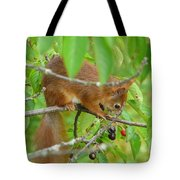 Red Squirrel In The Cherry Tree Tote Bag